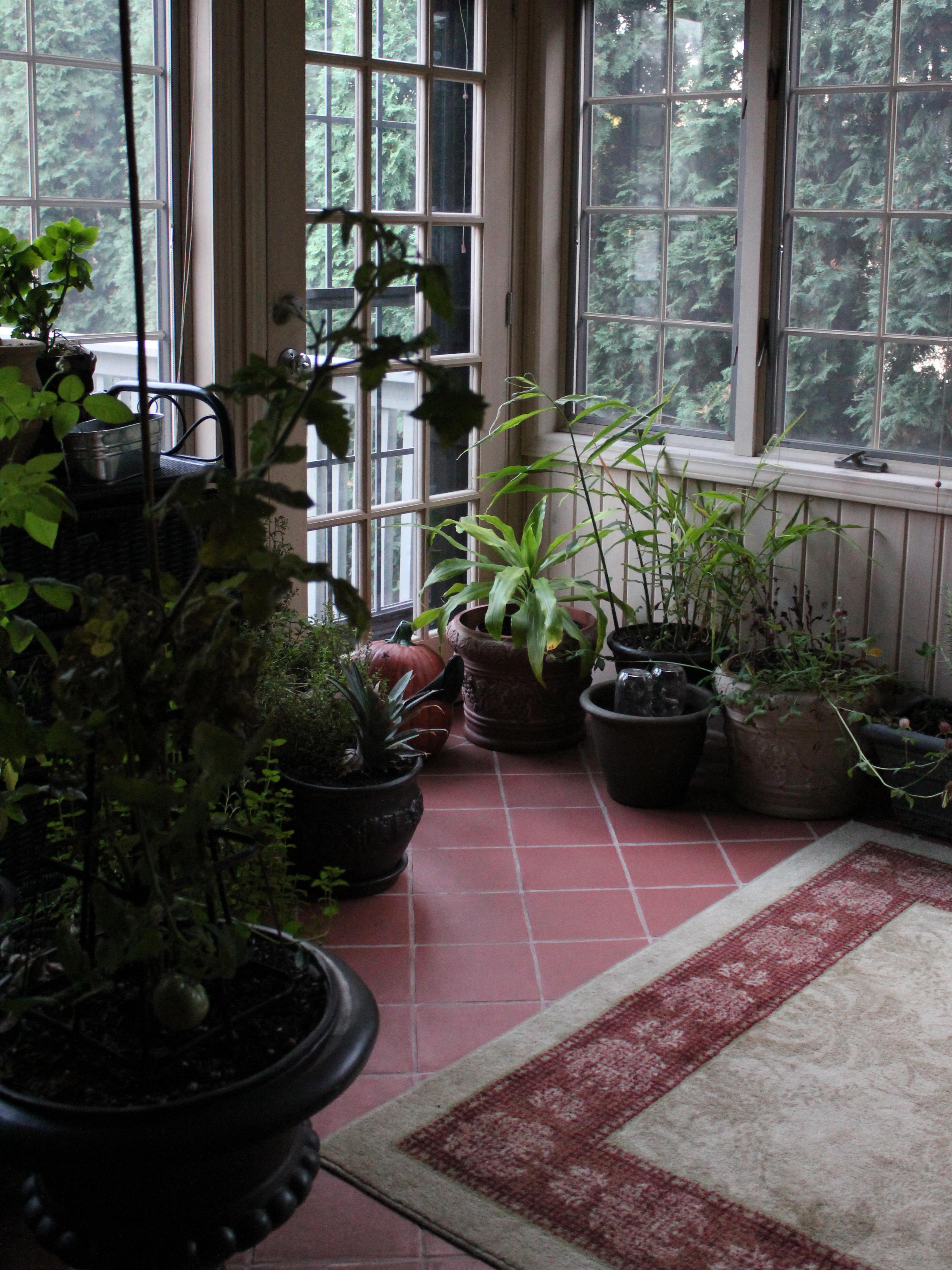 Makeshift Greenhouse