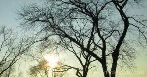 A Winter Tree - by VirtualityStudio/Liskabora