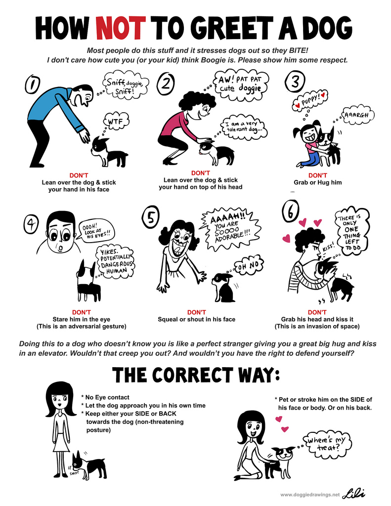 how to properly greet a dog
