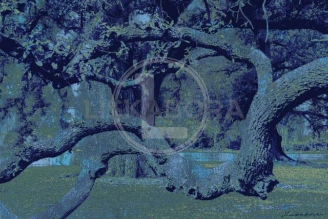 Twisted Oak Mixed Media Art